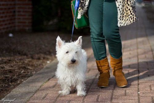 the leopard, the gingham and the westie-4.jpg
