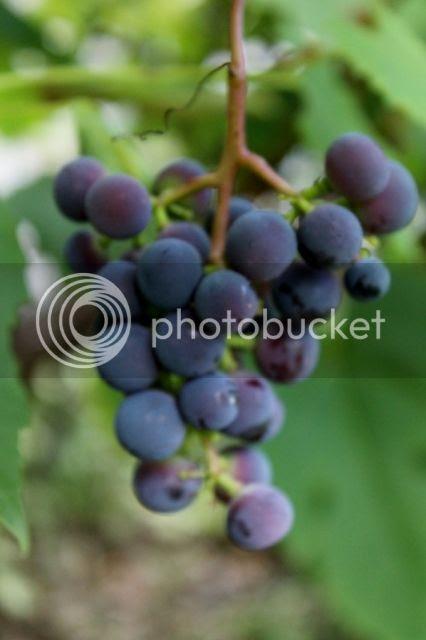 photo 2013-08-21210813048426x640_zpsb99d7774.jpg