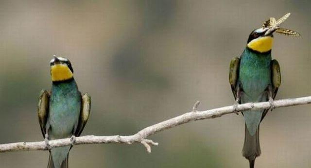 malu ama burung : Indahnya Berbagi
