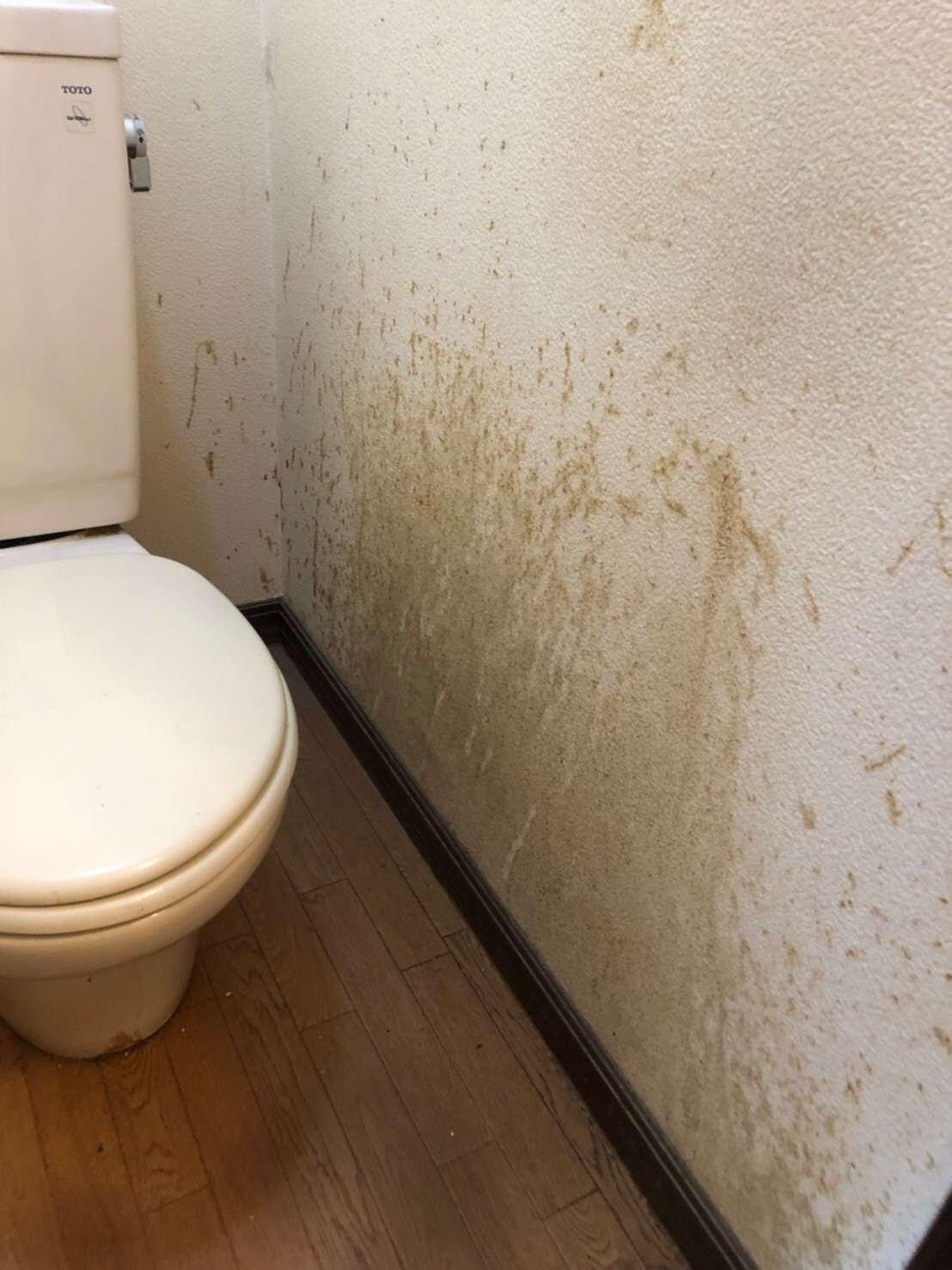 ここからダウンロード 壁紙 張り替え トイレ Hdの壁紙と画像の