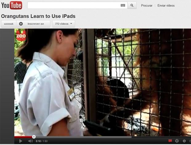 Orangotango interage com iPad, da Apple (Foto: Reprodução)