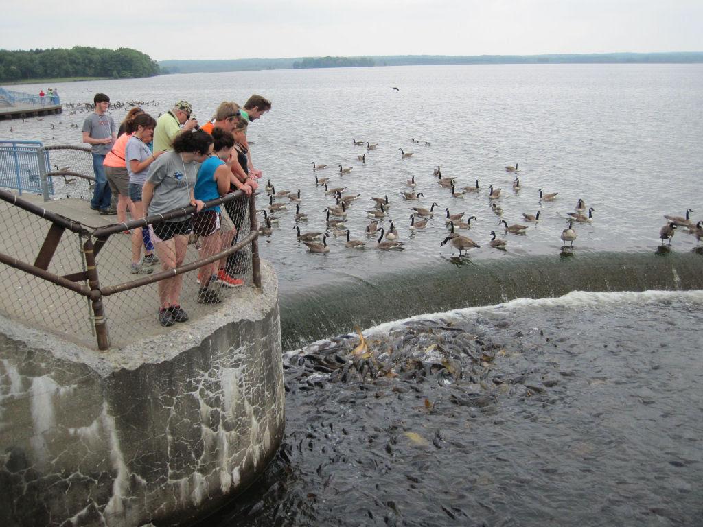 O vertedouro de Linesville: onde os patos caminham sobre peixes 10