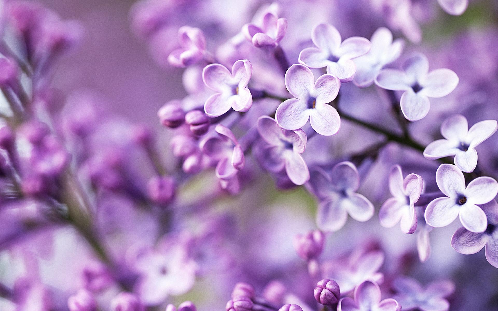Wallpaper Hd Purple Flowers