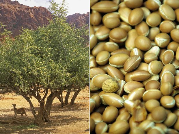 Óleo de árvore do Marrocos ajuda a hidratar cabelos, unhas e pele
