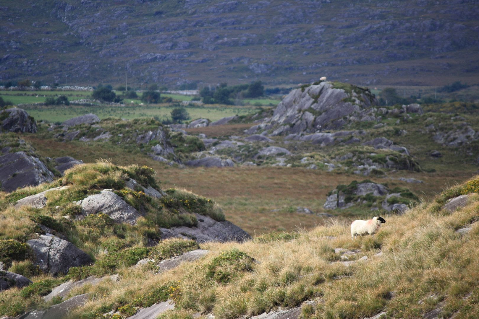 County Kerry, Ireland photo IMG_3325_zpst0aakiwi.jpg