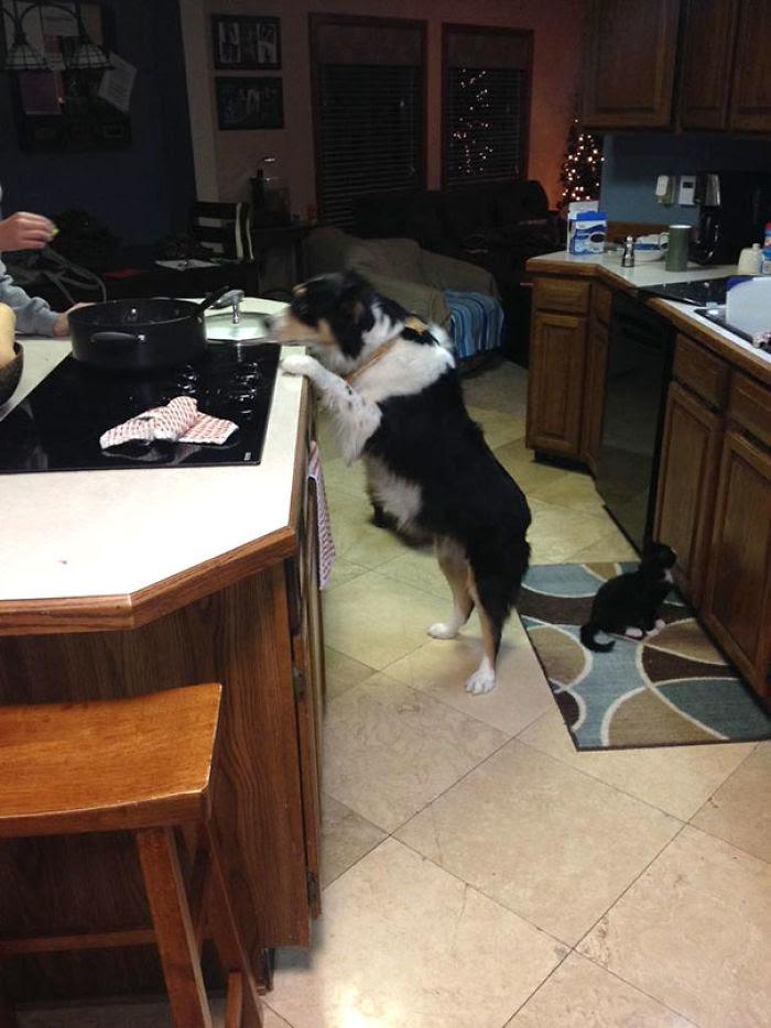 Mon chien mendiant pour de la nourriture Vs Mon chat aveugle mendiant pour de la nourriture