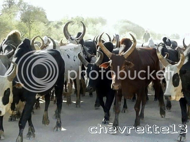 http://i1252.photobucket.com/albums/hh578/chevrette13/Madagascar/DSCN0180640x480_zps3d058e6d.jpg