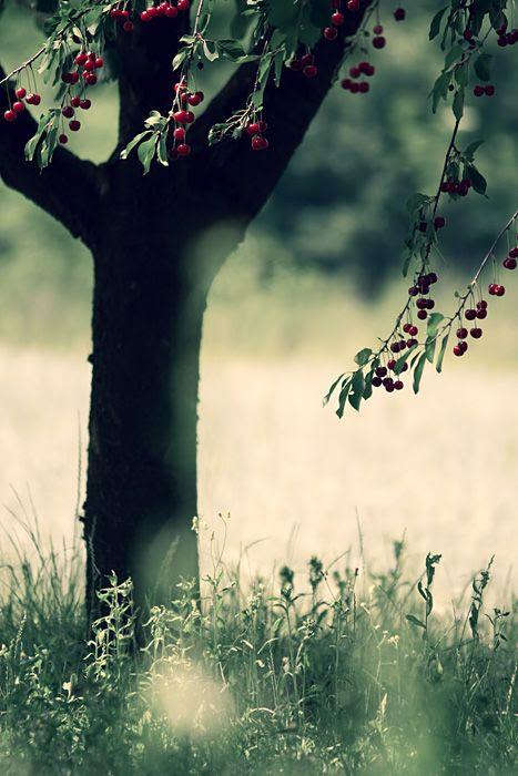 trees, 3