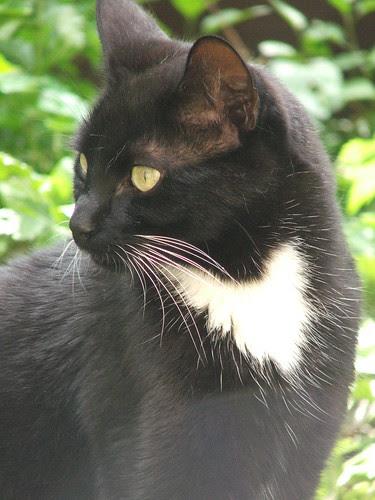 Rémy in the garden.