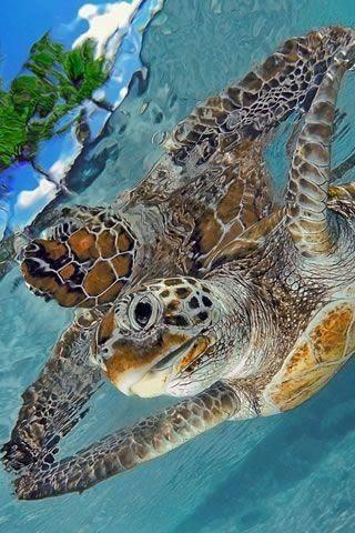 Ωρα για... χελωνο-μαθηματα κολυμβησης!