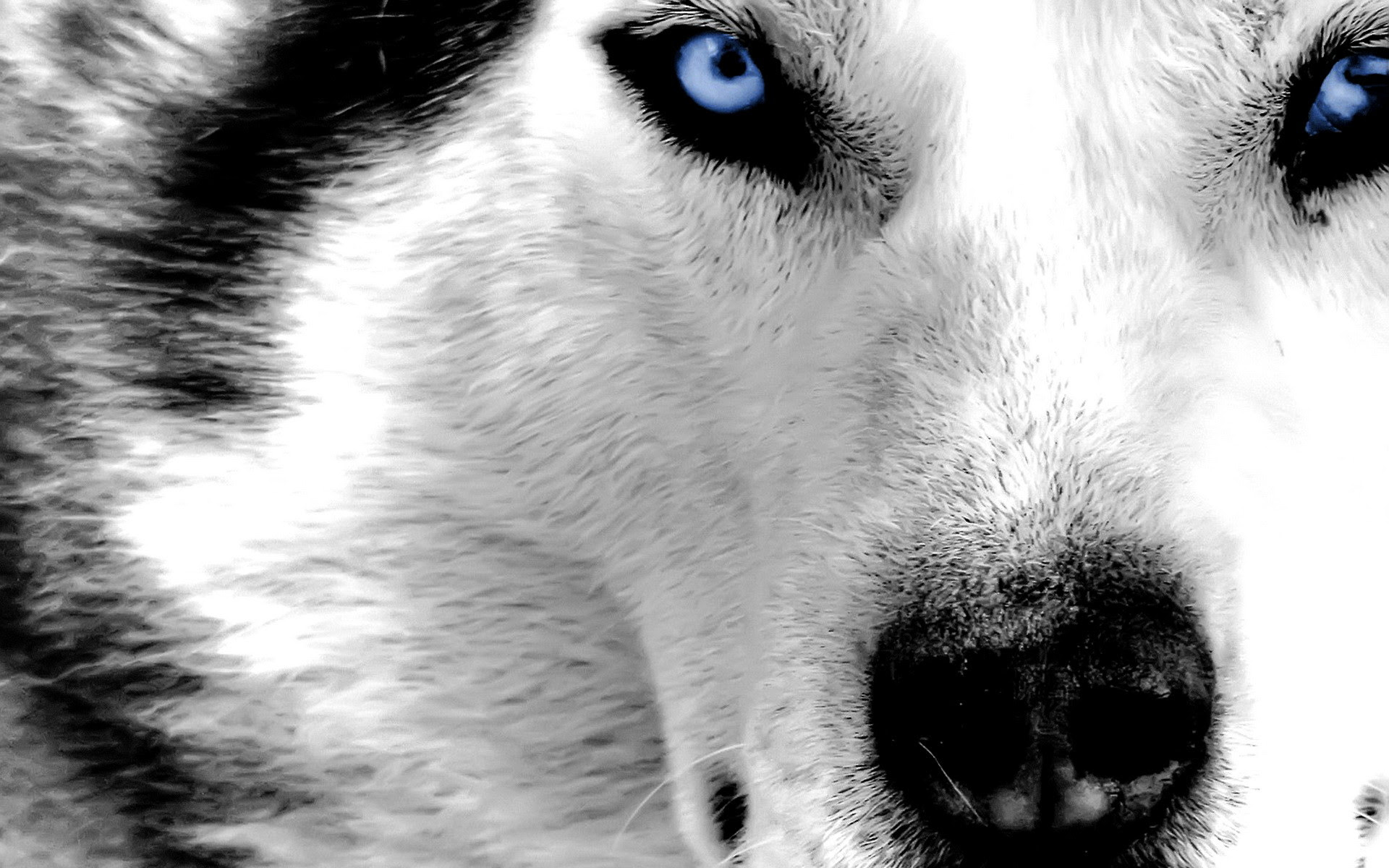 Pack Of Wolves Wallpaper 58 Images