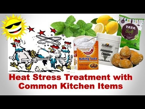 Heat Stress Treatment in Poultry by Common Kitchen Ingredients