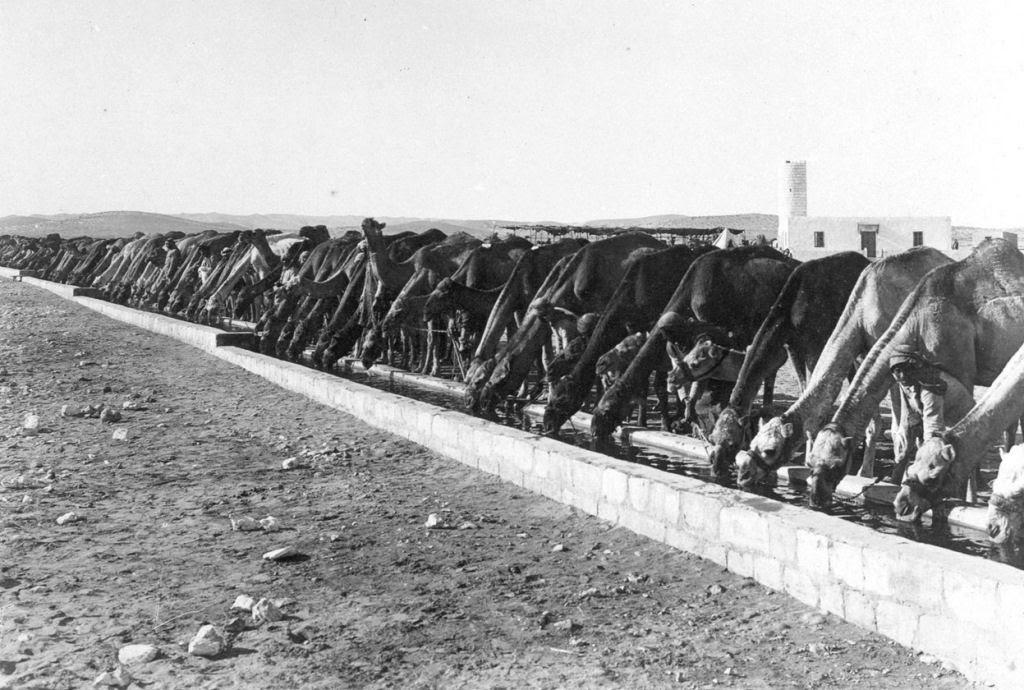 Os animais também lutaram na Primeira Guerra Mundial 31