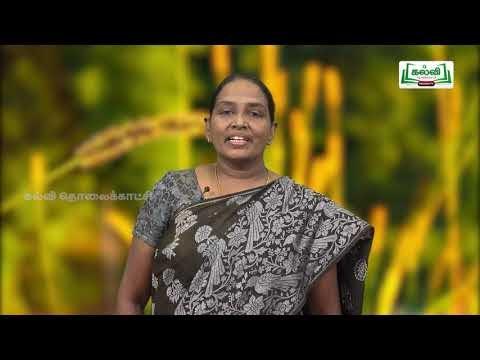 11th Zoology மரபுக்கடத்தல் அலகு 4 Kalvi TV