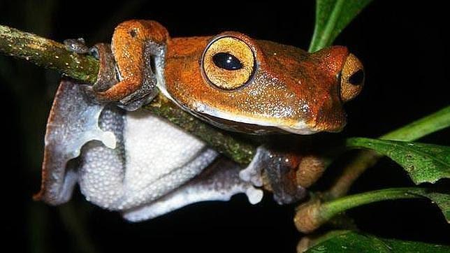 Diez curiosidades sobre las ranas que quizás no conozcas