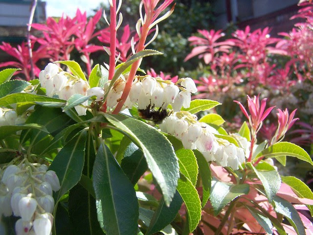 may 023 Bumblebee, yay!