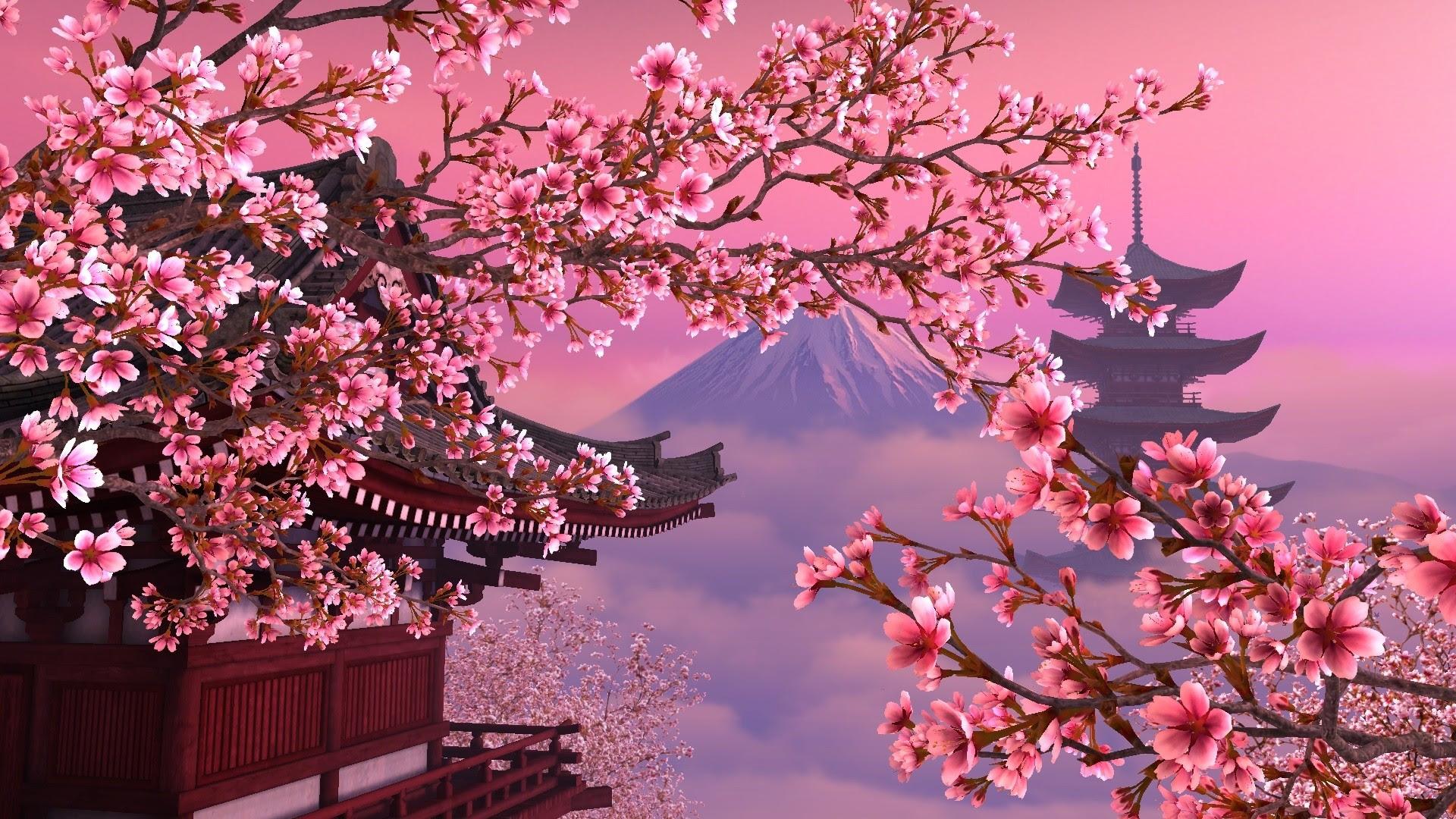 Japanese Cherry Blossom Wallpaper 1920x1080 59 Images
