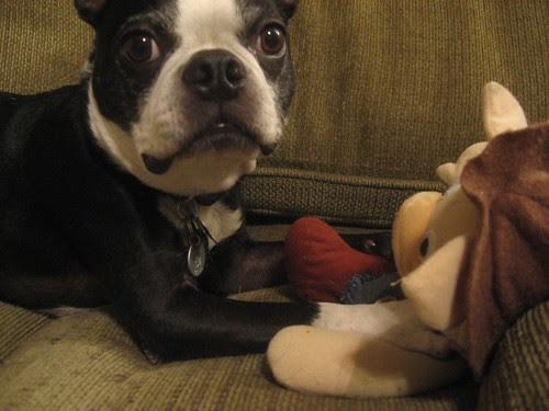 joey and cowboy pig