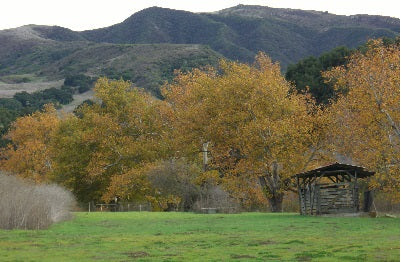 Santa Rita Hills, California Central Coast
