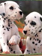 Puppies: Special bond