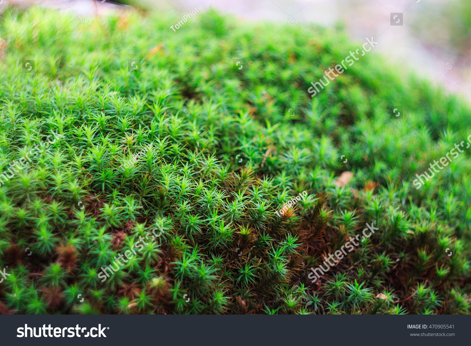 abstract, autumn, backdrop, background, bark, beautiful, blur, bokeh, closeup, color, defocused, design, detail, environment, flora, flower, focus, forest, fresh, grass, green, growth, leaf, lichen, life, macro, moss, mossy, natural, nature, outdoor, pattern, plant, rural, season, shallow, spring, stem, summer, texture, tree, wallpaper, wild, woodland, woods