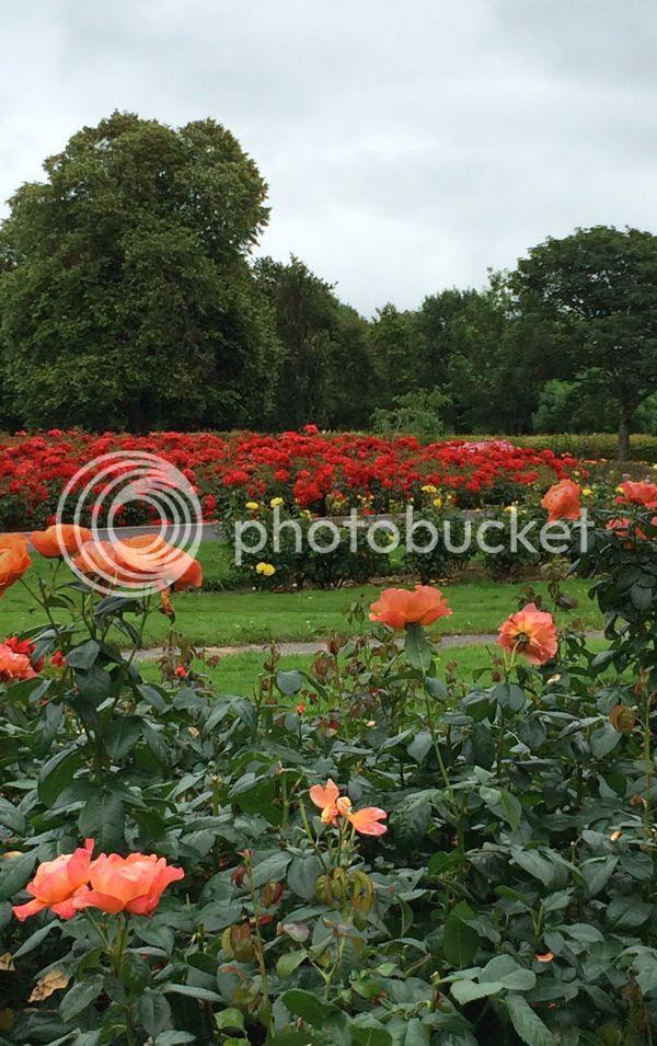 TraleeRose Garden Ireland