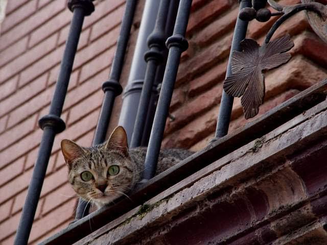 Desde lo alto de un balcón