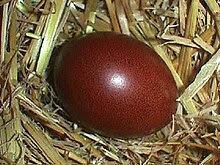 l'œuf de la Marans -