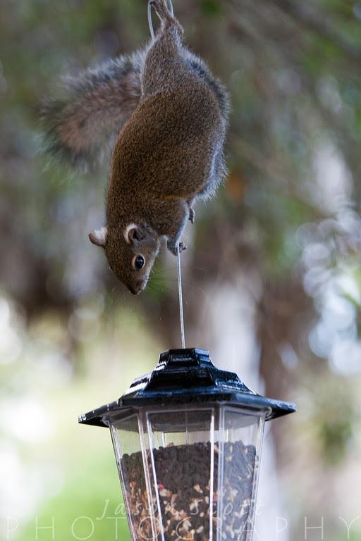 When he's not photographing Sarasota area weddings or family beach portraits, Jason enjoys Nature photography.