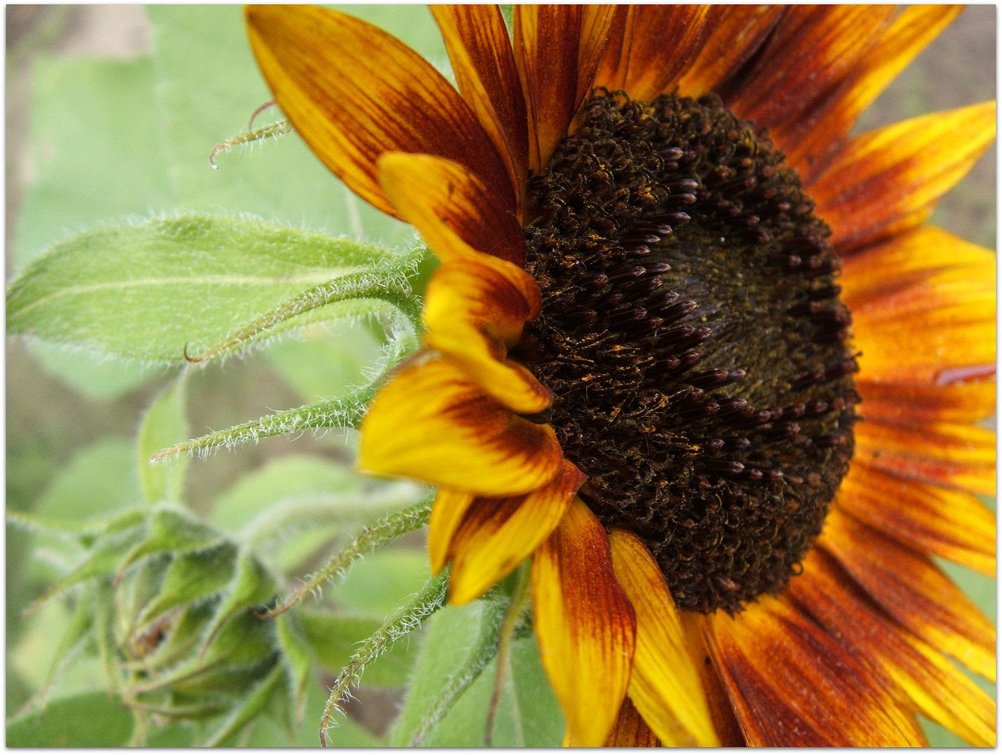 by Angie Ouellette-Tower for http://www.godsgrowinggarden.com/ photo DSCF8989_zpsq2vxopga.jpg