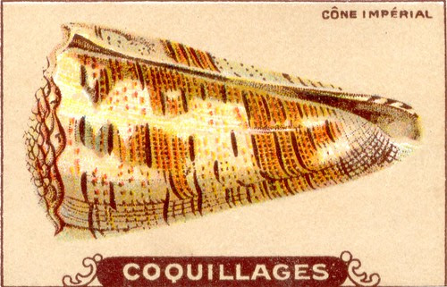 coquillages6