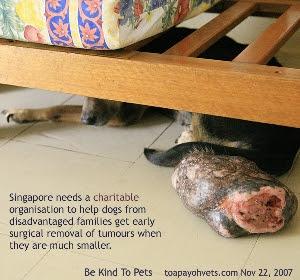 Massive tumour. Singapore Dog. Toa Payoh Vets