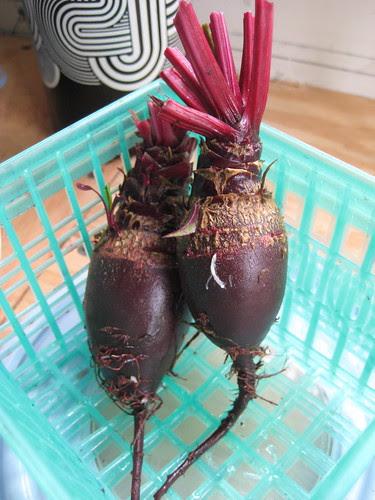 last beets of the season