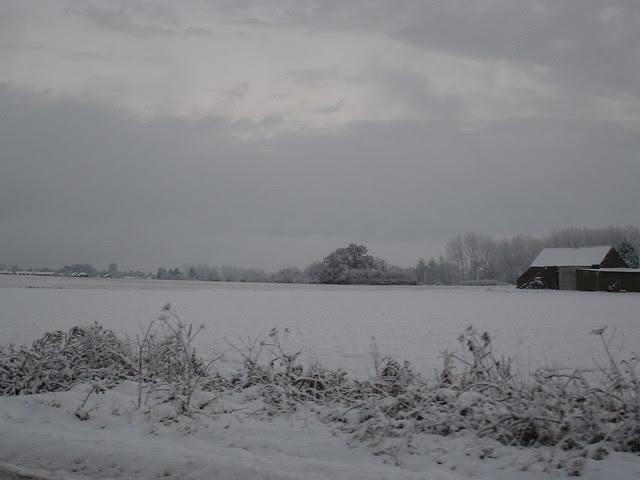 snowy november in norfolk (1)
