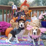 Shiloh and Diva Shasta - Team Beaglebratz