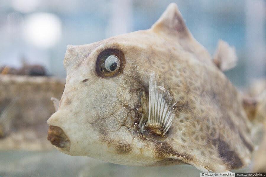 Рыба в музее ракушек Корфу