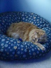 Jasper sleeping on the tuffet at night