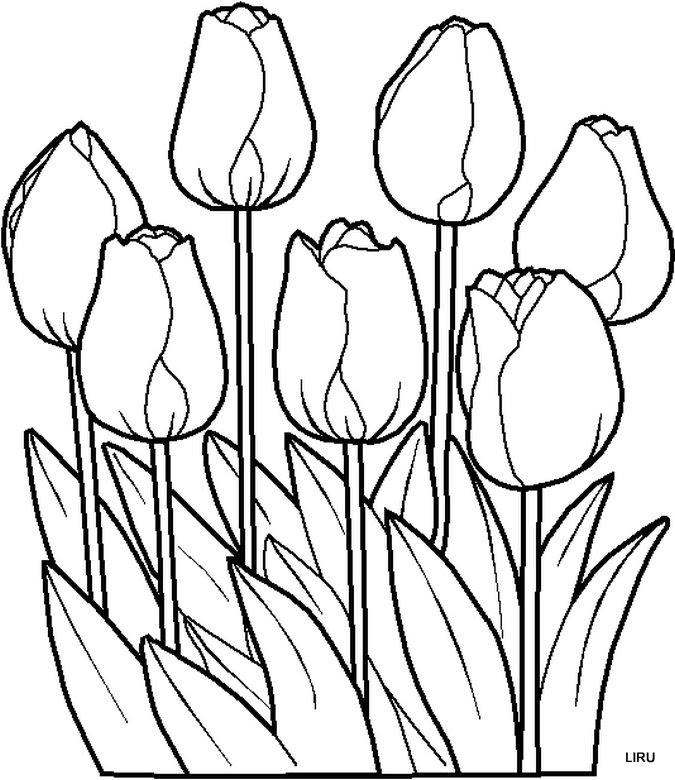 Imagen De Flor Tulipanes Bonitos Para Dibujar Pintar Colorear