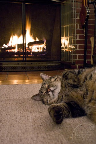 If the fire is burning, the cat will be there