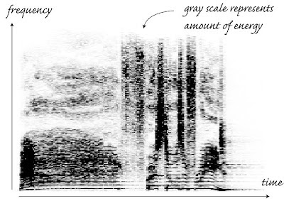 sonogram spectrogram voice