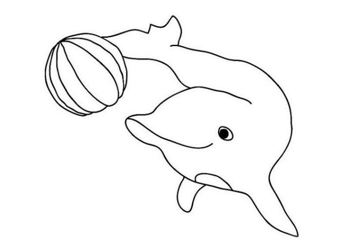 33 delphine bilder kostenlos  besten bilder von ausmalbilder