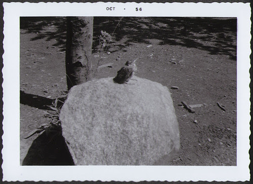 Yellowstone1956_Bird