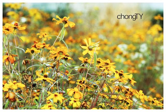 random_japan_flower
