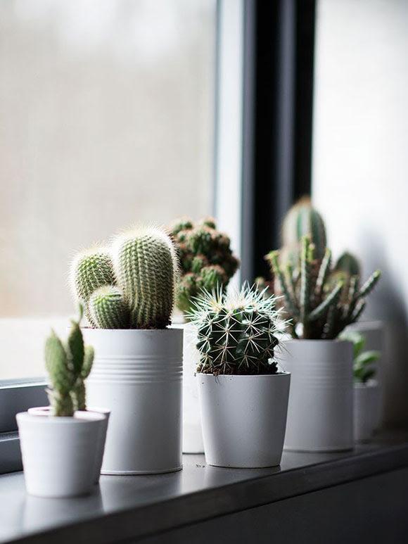 Resultado de imagen de cactus ikea