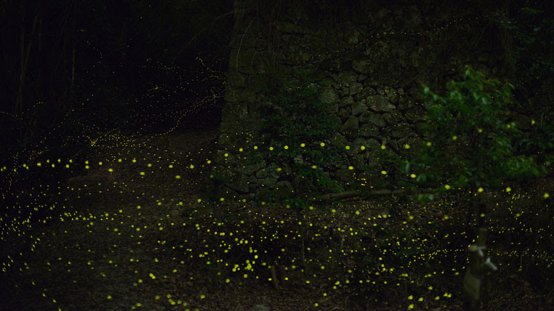 long-exposure-photos-of-fireflies-at-night-Tsuneaki Hiramatsu (2)