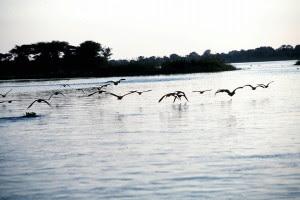 Футболисты утонули в одном из притоков реки Замбези