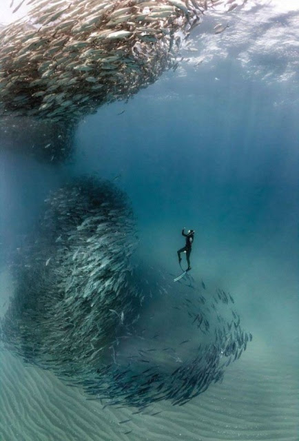 4 - Nonchalant Compilation of 31 Remarkable Images
