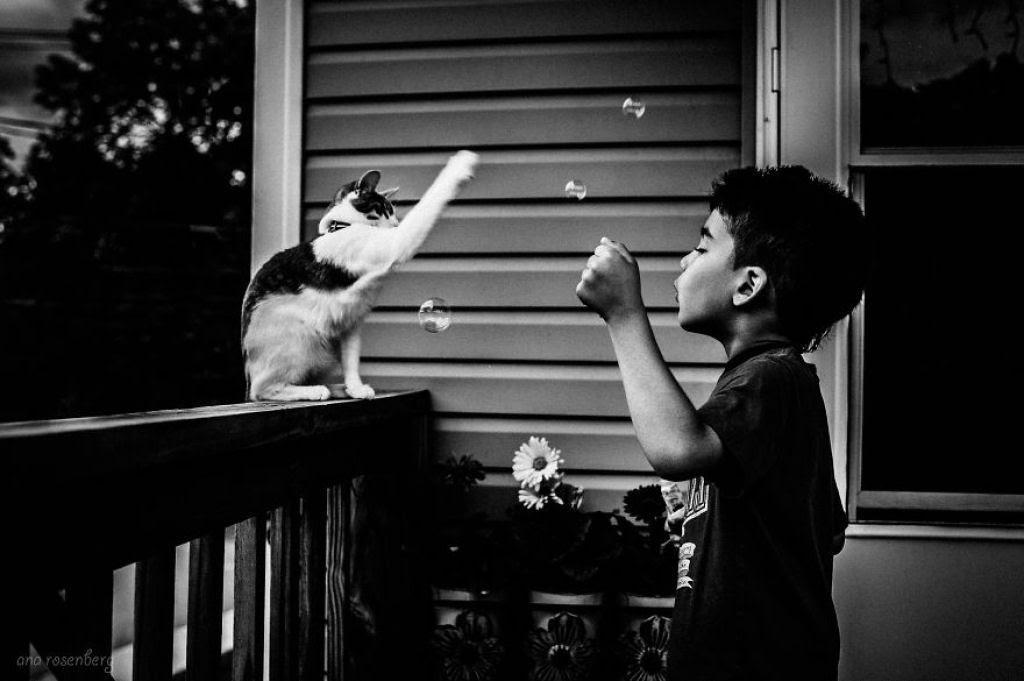 20 crianças brincando com seus gatos que alegrarão o seu dia 16