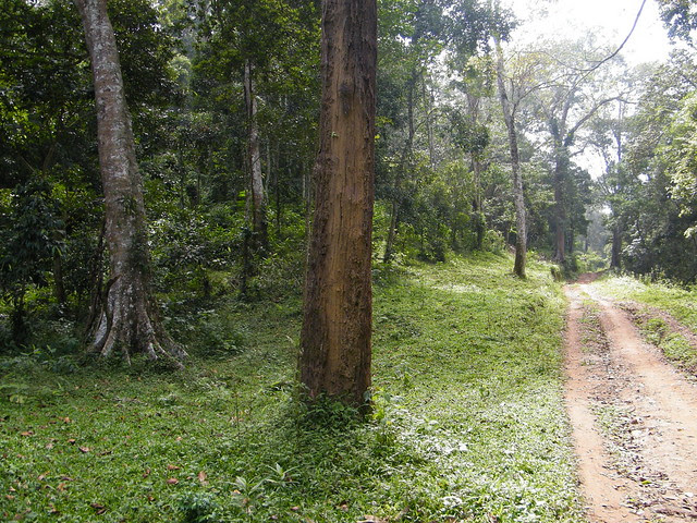 the road leading to deep in forest at Periyar Tiger Reserve, Thekkady, Kerala