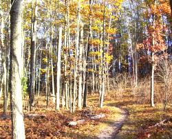 Lumberjack Trail
